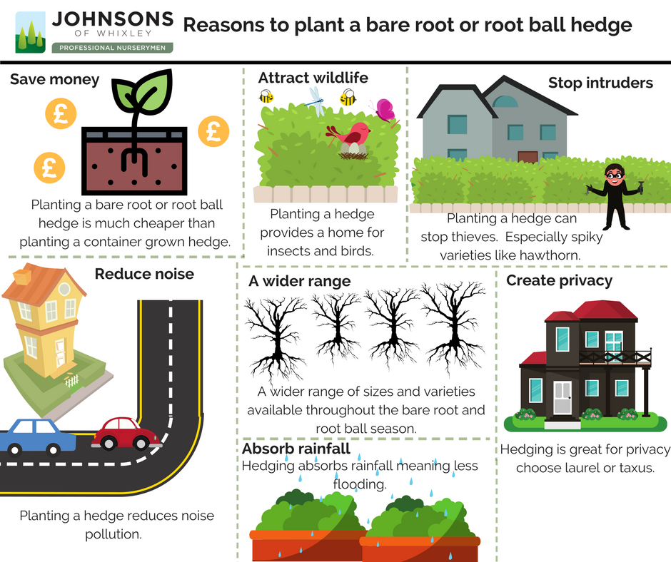 Reasons to plant a bare root or root ball hedge