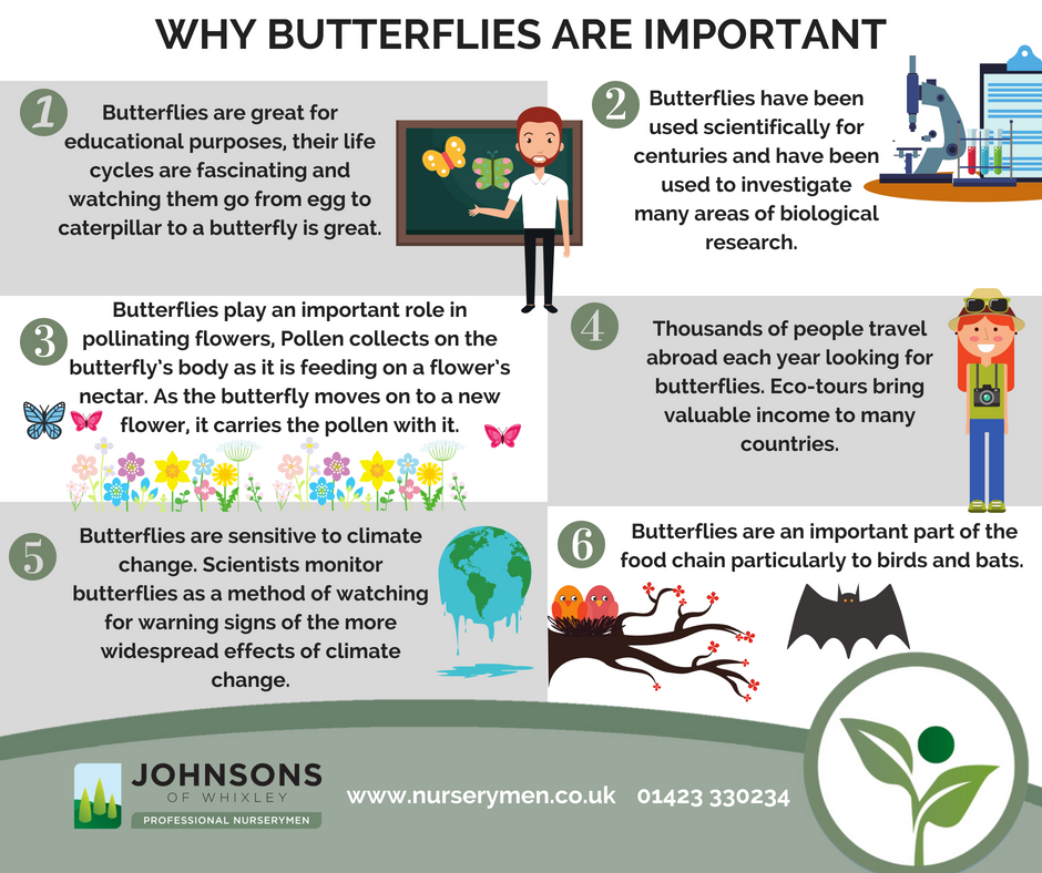 Why Butterflies are important to the world