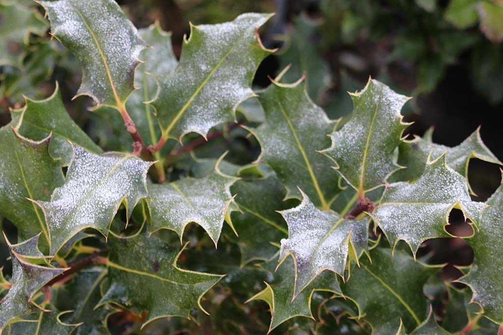 What to do in the garden this December