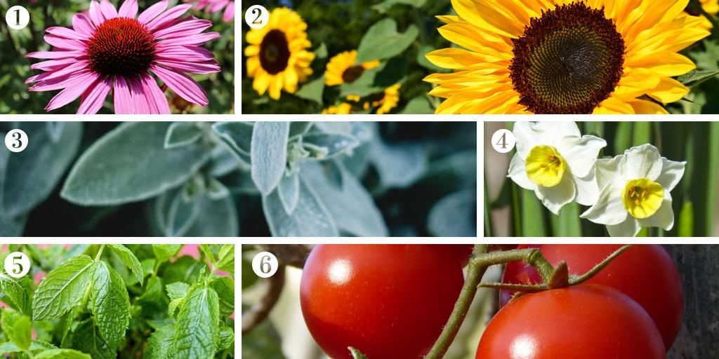 Great plants to encourage children to garden