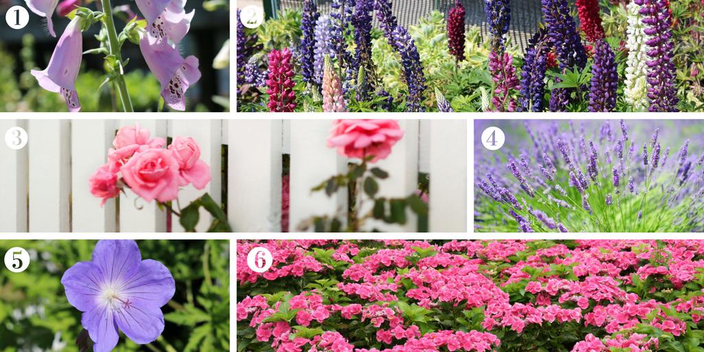 Six cottage garden favourites