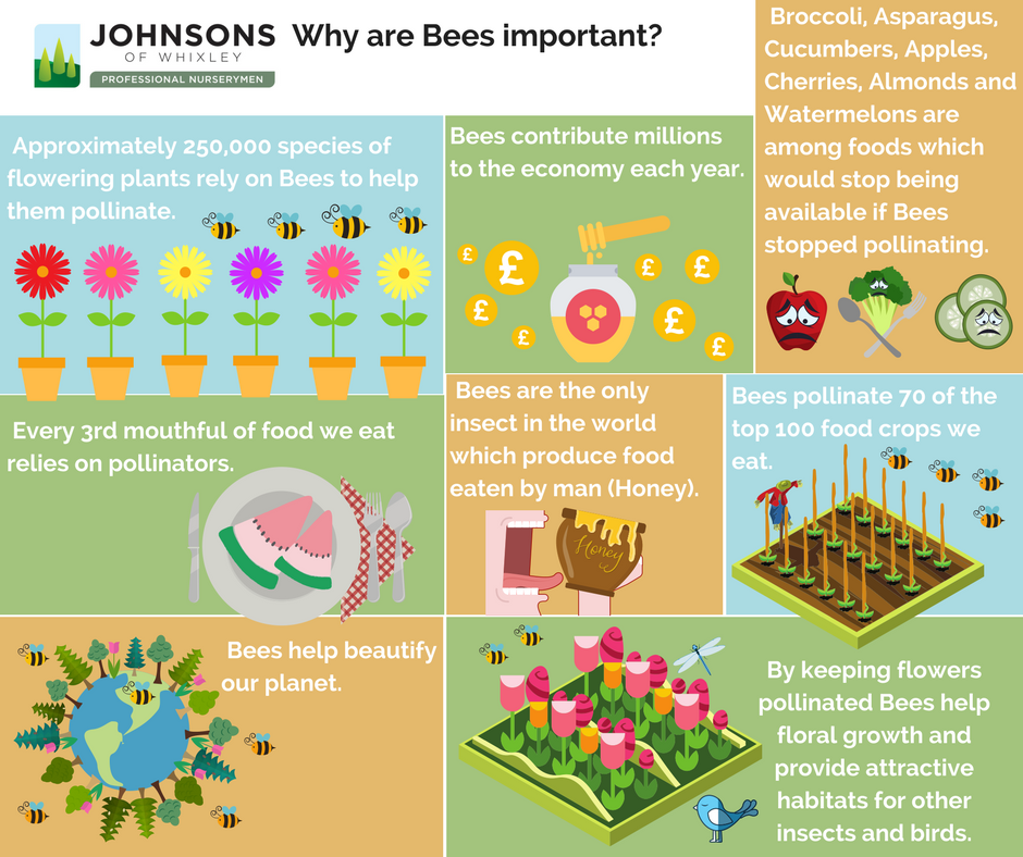 Why bees are so important to us