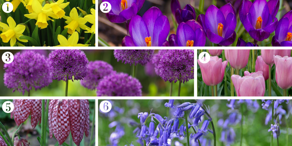 Six spring bulbs to mark the end of winter