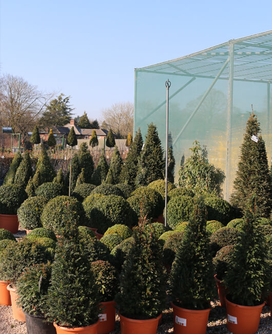 Topiary | Johnsons of Whixley Xpress