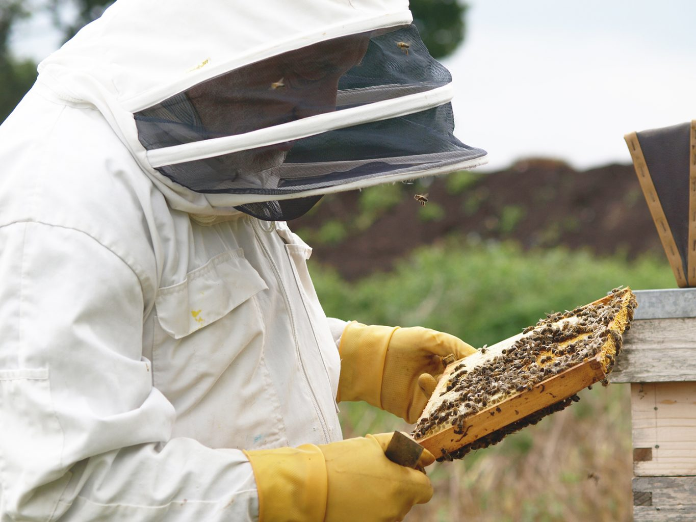 Bee keeping to help prevent a declining population