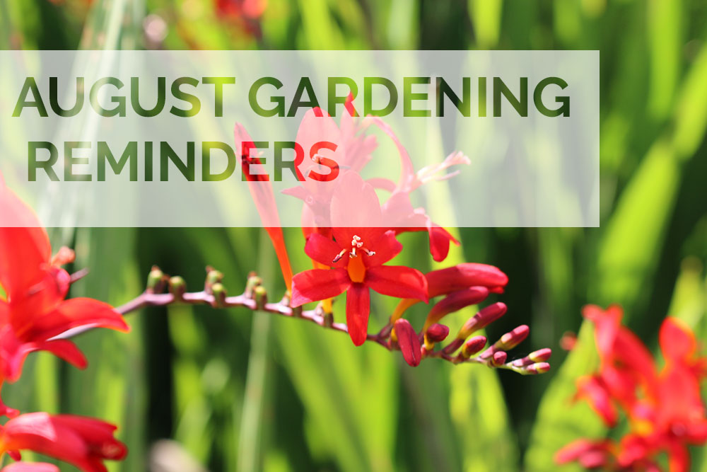 Jobs to do in the garden this August