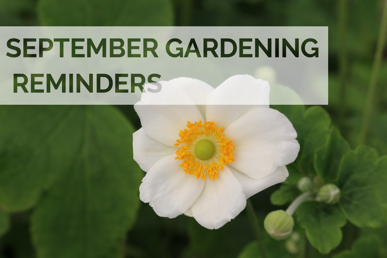 Jobs to do in the garden this September