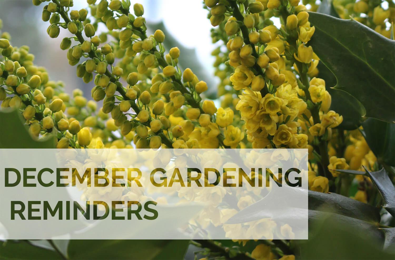 Jobs to do in the garden this December